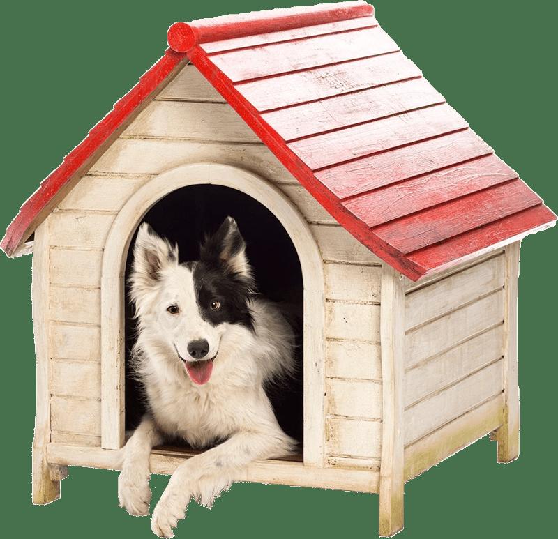 Dog House-cropped-800